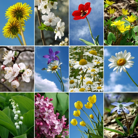 beautiful flowers collection Stock Photo - 11813851