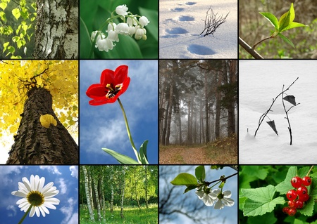 all seasons: all seasons nature  collage Stock Photo
