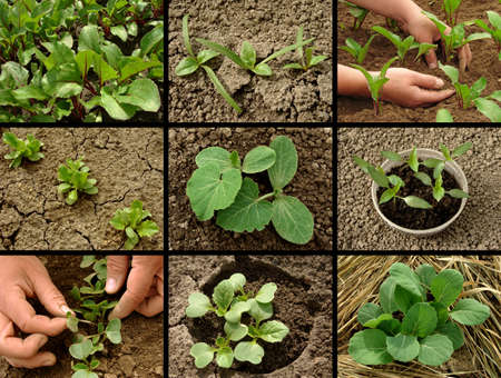 organic farming: vegetable seedlings collection Stock Photo
