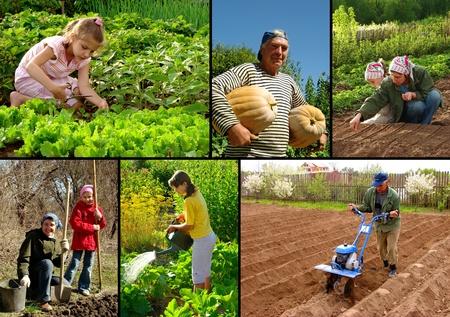 siembra: diversas actividades agrícolas en la chacra Foto de archivo