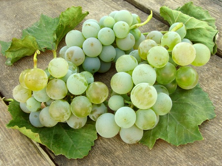 white grape clusters with leaves on old wooden background                                photo