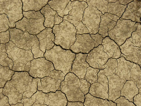 aridness: dry soil texture with deep fissures