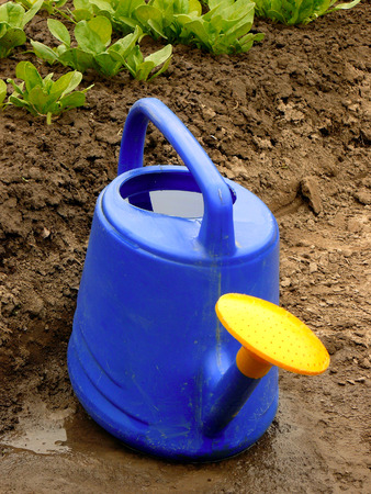 farming tools: watering can against spinach bed Stock Photo