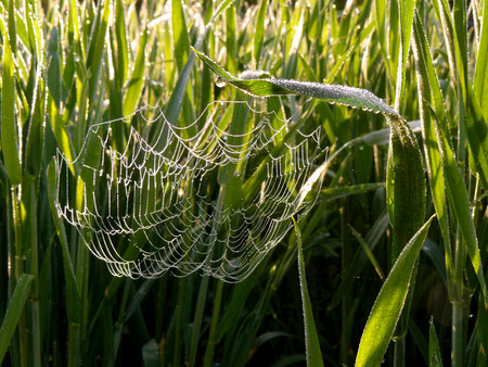 spider web among growing grass photo