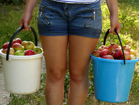 full grown: girl carrying two buckets of freshly harvested apples Stock Photo