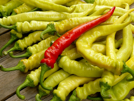 zesty: fresh harvested hot chili peppers