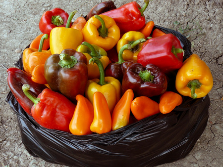 home grown: home grown sweet peppers in plastic bag