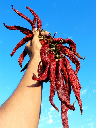 zesty: hand holding bunch of dry hot chili peppers