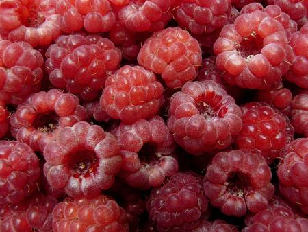 freshly picked: freshly picked raspberries background