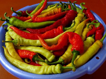 pickling: fresh harvested giant hot chili peppers preparing for pickling