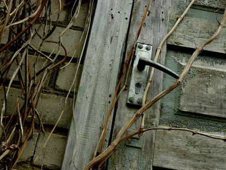downgrade: fragment of brick-wall and the door of abandoned house overgrown with lianas Stock Photo