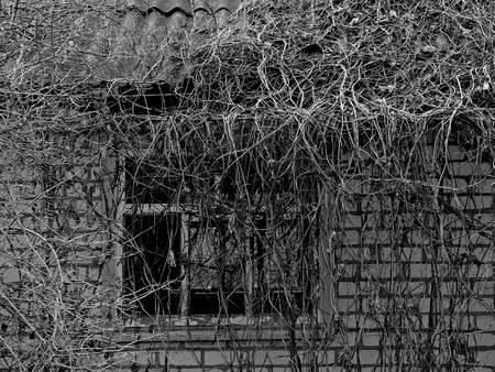 downgrade: fragment of small abandoned house overgrown with lianas in black and white