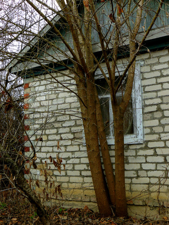dilapidated wall: small abandoned house with tree grown from the basement Stock Photo