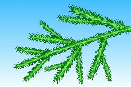 spruce: Subdivisi�n de Picea