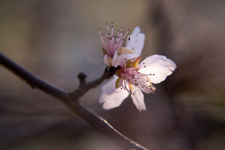 nines: Peach blossom