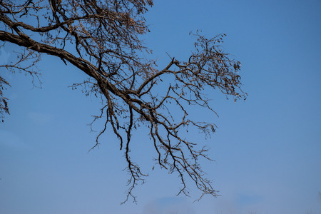 perseverance: Branches