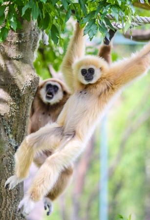 Mono jugando en el bosque en un zool�gico Foto de archivo - 20866628