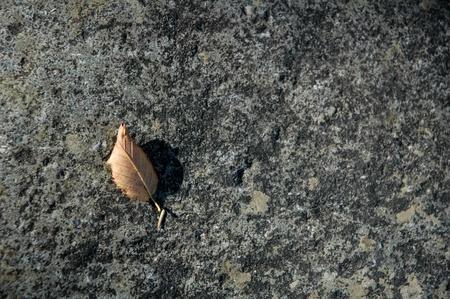 Elm leaf on granite, natural texture Stock Photo