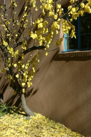 fe: autumn in santa fe  brings golden leaves and slanting sunlight Stock Photo