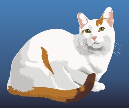 Shy cat Vector