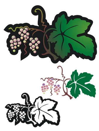 non: wild grapes ripening   With black outline and non gradient versions Illustration