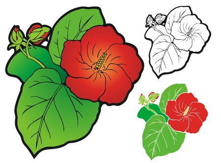 scarlet: Scarlet hibiscus flower  Comes with non gradient and black outline versions