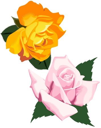elegantly: Two hybrid tea roses, The richly colored Orange Honey, and the elegantly pointed Lady X