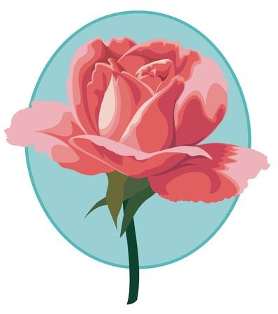 Hybrid tea rose  Tiffany , an elegant pink flower  Illustration