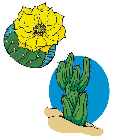 southwest: Cactus, and cactus flower, spot illustrations for a southwest theme  Illustration