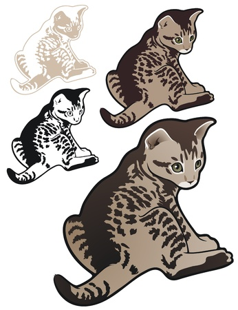 tabby kitten with variations