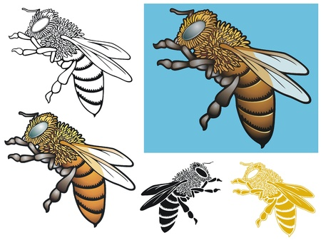 Honeybee with varitations Illustration