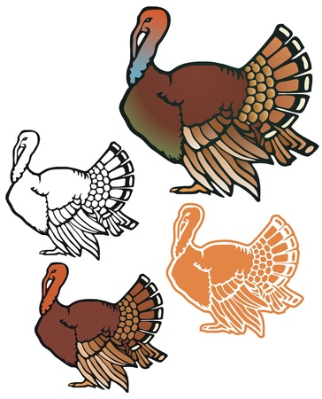Turkey with variations