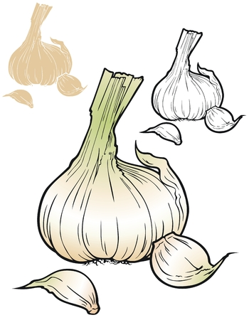 cloves: Garlic bulb with a couple of loose cloves