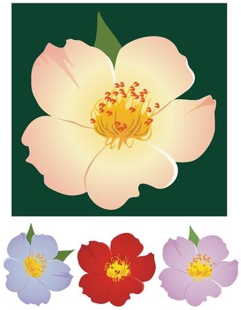 simplex: simplex rose