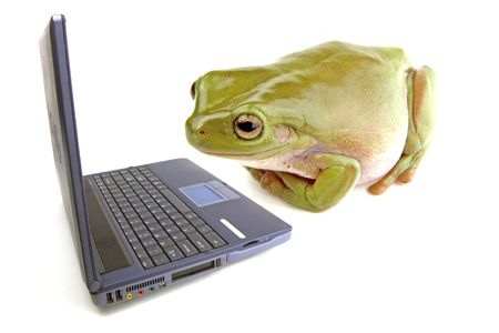 A frog on a white background looking at a computer photo