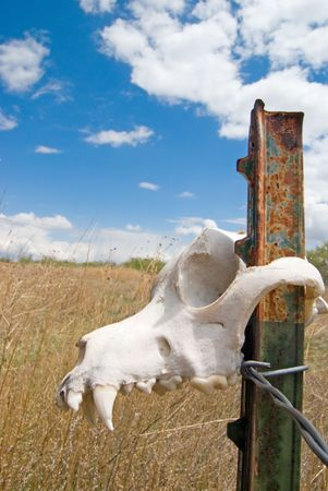 jawbone: A animal skull hanging on a fence post in Colorado