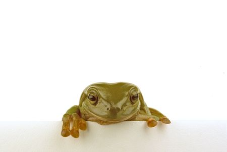 croak: A trog looking over a white piece of paper
