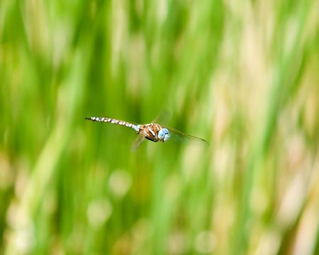 A close up of a dragonfly in flight Stock Photo - 3251854