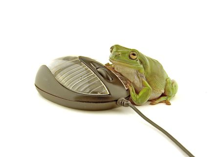croak: a green frog using a computer mouse