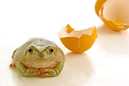 frog egg: A frog just hatched from a egg on white