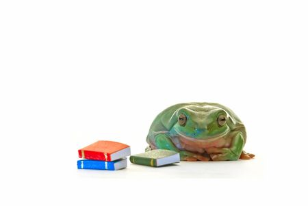 A Green frog with books on white background photo