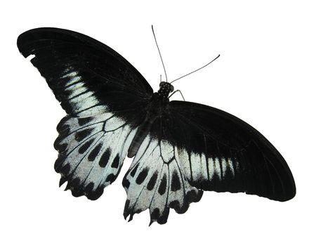 feeler: Isolated black-white butterfly... Stock Photo