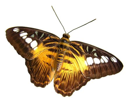 Isolated colorful butterfly... Stock Photo