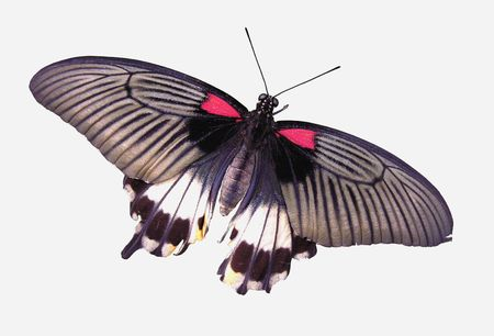 Isolated butterfly