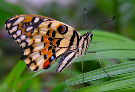 Colorful butterfly sitting on a leaf... Stock Photo
