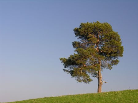 A lonely pine on a grassy hill... Stock Photo