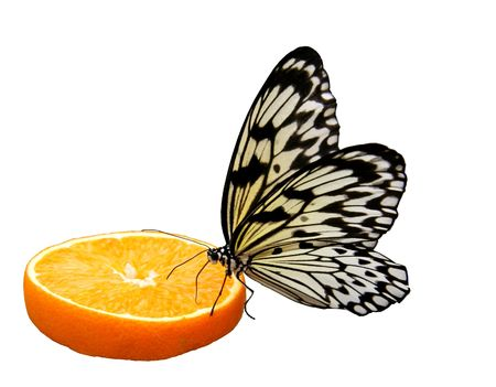 exempted: Butterfly sitting on an orange slice