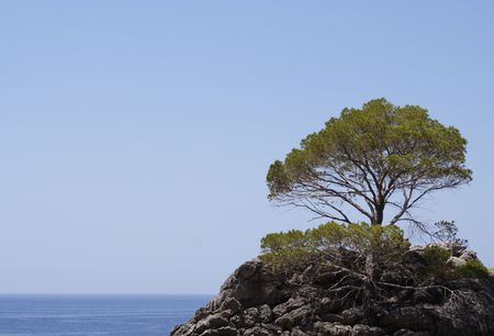 A lonely pine on a small island in the Mediterranean sea... Stock Photo