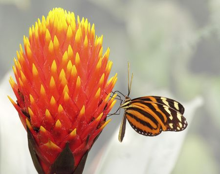 A butterfly sitting on a flower... Stock Photo