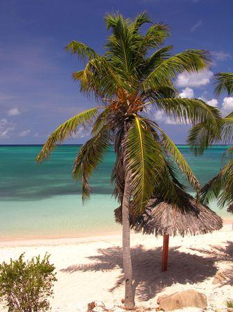 Coco Beach  Aruba